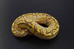 11-200-ghost-butter-female3