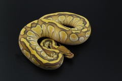 11-201-ghost-butter-female3